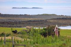 Flatey-Island_Island_21
