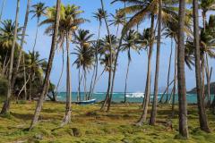 Bequia, Ostküste, St. Vincent. Grenadines. Karibik 20