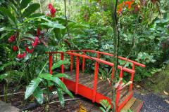 St. Lucia, Diamond-Botanical-Garden_Kleine Antillen, 20