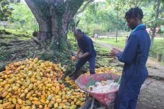 St. Lucia, Morne Coubaril Historical Adventure Park_ Kleine Antillen, 20